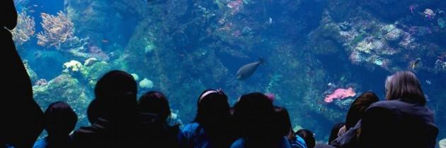 Tag i akvarium og oplev verdenen under havets overflade