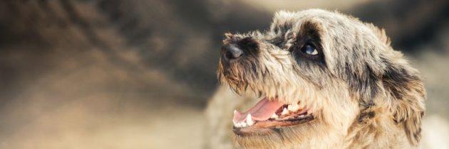 Få din egen hund igennem nettet